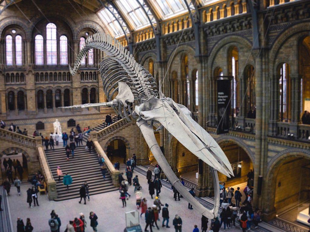 Natural History Museum